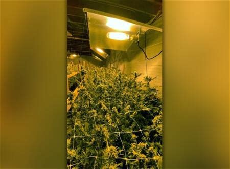 Detectives Uncover Marijuana Operation Inside Vacant Warehouse Near Downtown Fresno