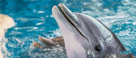 Dolphin Sanctuary Learn more about our plans to create North America's first sanctuary for Atlantic bottlenose dolphins.
