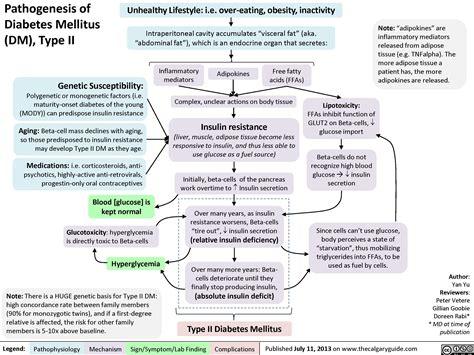 Pathogenesis of Diabetes Mellitus (DM), Type II | Calgary Guide