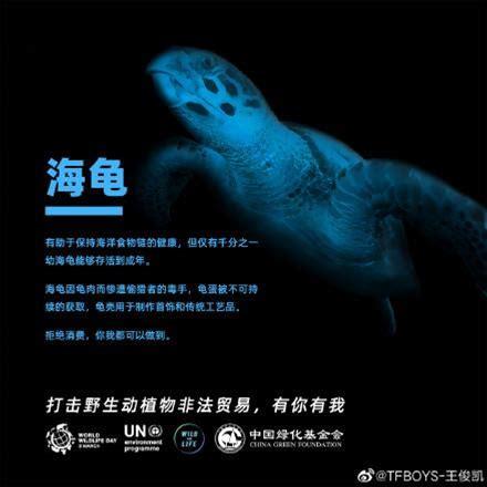 你知道嗎,海龜會在海草床上吃海草,修剪並保持海草健康。海龜對於保護海洋生態系統的健康至關重要,然而僅有千分之一的海龜可以存活到成年。和我一起承諾,不購買任何海龜製品,#為生命吶喊#。打擊野生動植物非法貿易, 有你有我。@聯合國環境規劃署 @中國綠化基金會 
