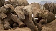 Ami Vitale: One Village, Thirteen Elephants and the Moon