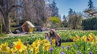 Skip the Line: VanDusen Botanical Garden Admission Ticket