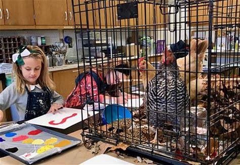 Hens Enrapture Students, Teach Economics about Hens Enrapture Students, Teach Economics
