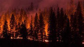Stay Safe During a Wildfire