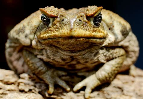 WHAT IS THE DIFFERENCE BETWEEN A FROG AND A TOAD? |The ...