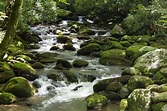 Roaring Fork Motor Nature Trail | Photos & Insider Tips