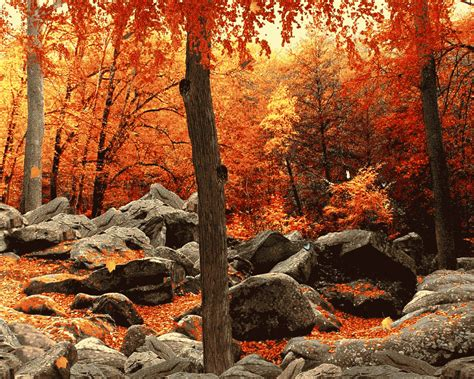 3D Autumn Woods Wallpapers - HD Nature Pictures & Wallpapers
