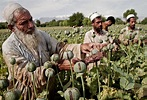Afghanistan Set Record for Growing Opium in 2014