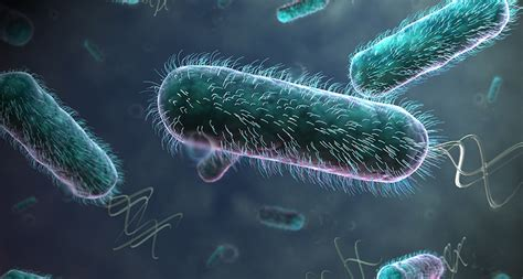 Swimming bacteria remove resistance to flow | Science News