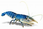 Invertebrate Animals | Invertebrates for Kids | DK Find Out