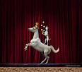 dog and pony perform tricks on stage in a funny stock photo about ...