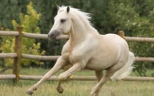 santiago30caballeros.com: Descuartizan caballos en San Cristóbal para vender su carne