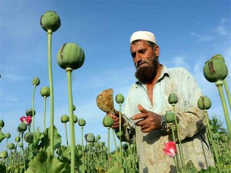 Heroin Boom: Afghanistan Producing 25 Times More Opium ...