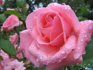 ... melhores fotos de flores da internet em uma lista de encher os olhos