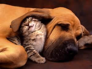 Funny Cat and Dog - Wallpaper #30725