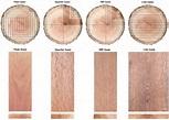 plain sawn wood cut at a 30 degree or less