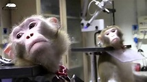 Primates in biomedical Research - YouTube