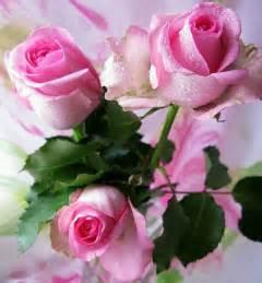 Ramo de rosas rosa muy bellas - Imagenes de                    rosas