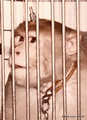 Animal Experiments Pictures - Primate Graphic Animal ...