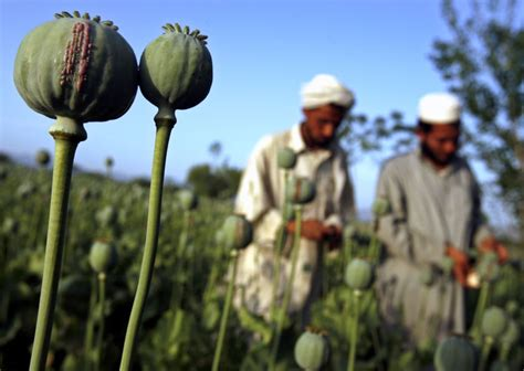 The Opium Problem in Afghanistan and Russia at the End of ...