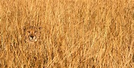 Camouflaged Animals in their Natural Environment (22 ...