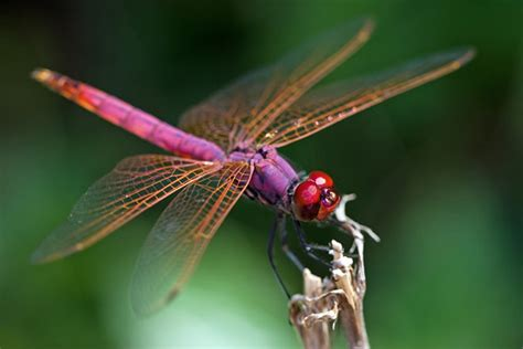 Dragonfly | Animal Wildlife