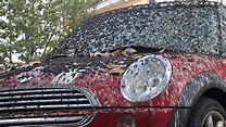 Car Covered In Bird Droppings 1. Major Problem In Rome ...