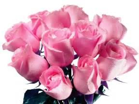CLUBE DE LEITORES da GRÃO VASCO: Curiosidades sobre rosas