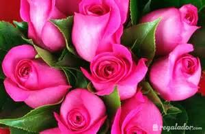 Regalador - Ramo de rosas rosas. Envío gratis desde 25€