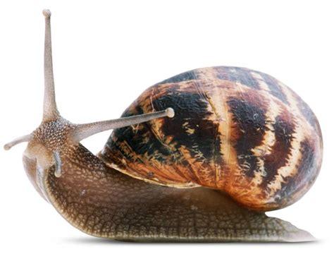 What are Invertebrates | Invertebrates Facts | DK Find Out