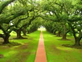 camino-entre-los-arboles