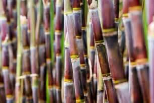 Preservação do Solo na cultura da cana de açúcar