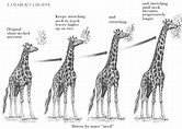 natural selection giraffe example - Google Search | Essay 2- | Pinterest | Natural selection ...