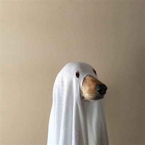 Spoopy Dog | Spoopy | Know Your Meme