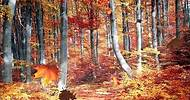 New Age Music; New Age Piano: Relaxing Piano and Guitar, Musica New Age; Autumn Light, Paul Landry