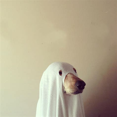 Ghost Dog Pictures, Photos, and Images for Facebook, Tumblr, Pinterest, and Twitter