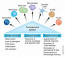 Immune System - Weekly UpTake