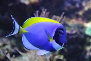 Saltwater Aquarium Fish - Connie's Tropical Fish
