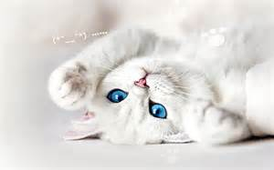壁纸首页 > 动物壁纸 > 猫咪撒娇桌面壁纸 > 1280x800 ...