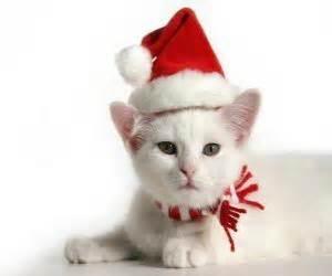 Puzzle de gato blanco con gorro de Papá Noel